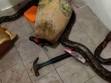 Elle se fait attaquer par un énorme python dans ses toilettes