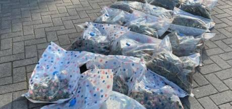 Politie haalt 13 kilo hennep uit appartement in Oud-Woensel