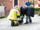 De brandweer rukt uit! Niet voor een brand, maar een kat op het dak