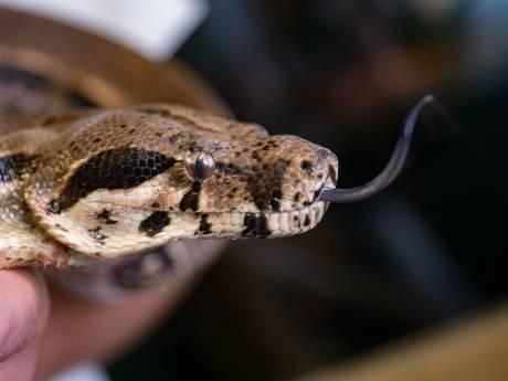 Anti-slangengiflab laat oog op Deurne vallen