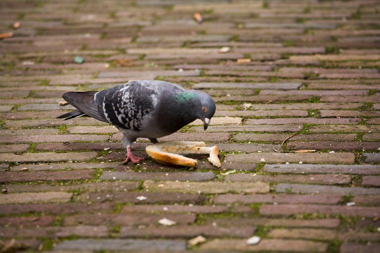 In de binnenstad van Utrecht doet een duif zich tegoed aan een op straat gesmeten boterham. Beeld Rob Huibers