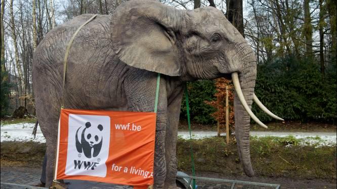 Gulle schenker laat ruim 10 miljoen euro na aan WWF
