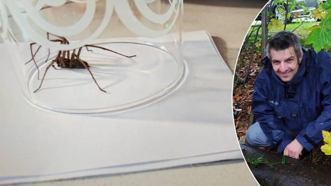 Hoe krijg je spinnen weg uit je huis? En hoe geraak je van een spinnenfobie vanaf? Experten geven advies