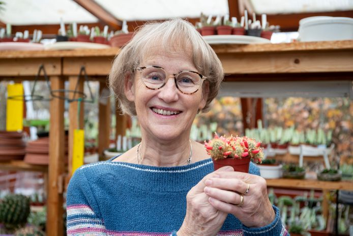 "Annemieke van Ling kweekt cactussen, deze ""mammillaria prolifera"" is haar dierbaar."