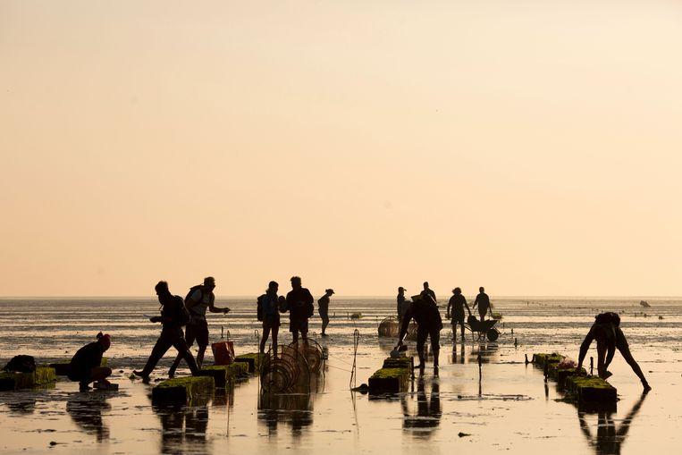 De biodiversiteit op en rond de aangelegde schelpenriffen bij Griend wordt met een groot team bemonsterd. Beeld Laura Govers