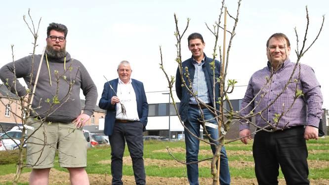 """Tuin politiecommissariaat wordt boomgaard: """"Volgend jaar al eerste appeltjes"""""""