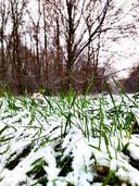 Tamara Mourits uit Waddinxveen maakte deze foto van sneeuw in het Gouwebos.