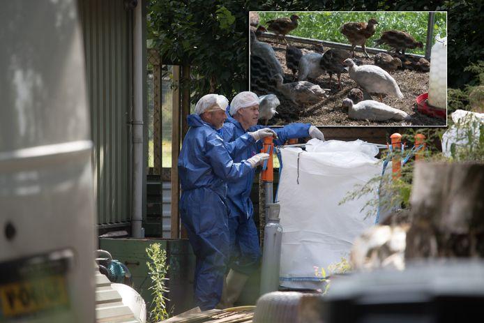 Medewerkers van de zijn bezig met het vergassen van 665 sierwatervogels, waaronder mandarijneenden.