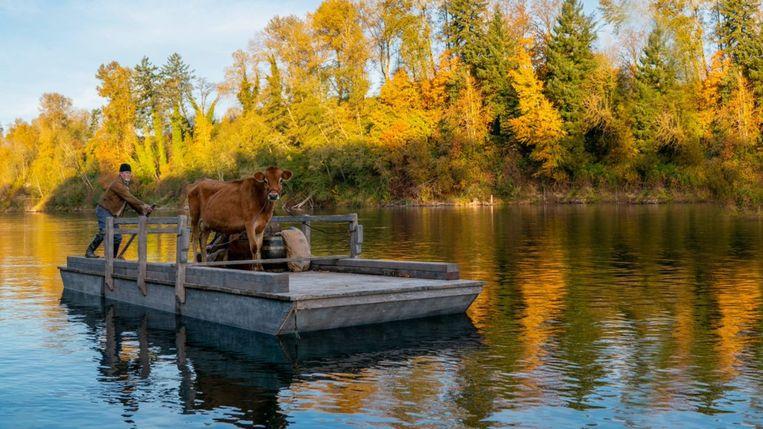 In het openingsbeeld van First Cow vaart het vrachtschip tergend langzaam van de ene kant van het kader naar de andere kant.  Beeld Filmstill