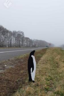 Pinguïns langs provinciale weg in Drenthe verrassen automobilisten en politie