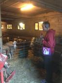 Jerry neemt schapengeluiden op in de schapenkooi van herder Annie Lashermes.