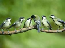 Amersfoort zet mezen en vleermuizen in tegen eikenprocessierups