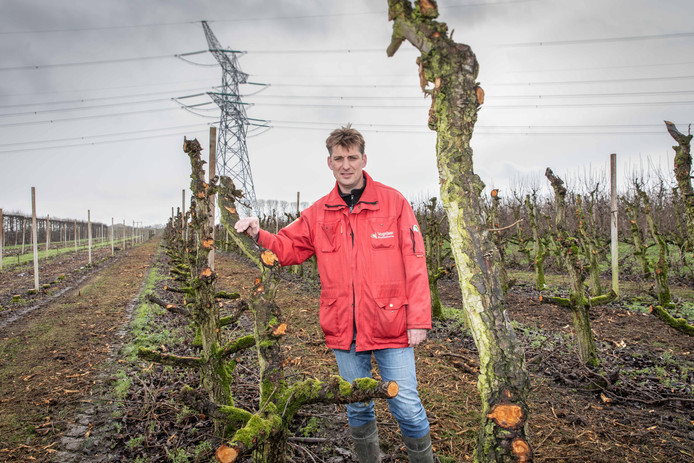 De 380kV-lijn loopt nu dwars door de boomgaard van Martijn Vogelaar. Rond 2025 zal deze lijn onder de grond worden gelegd.