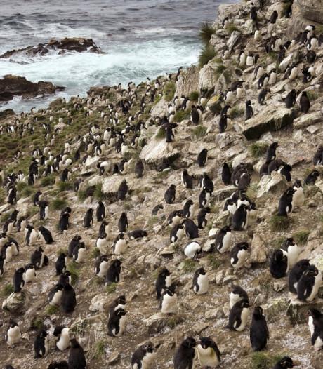 Te koop: een eiland met een legertje pinguins, maar voor hoeveel?