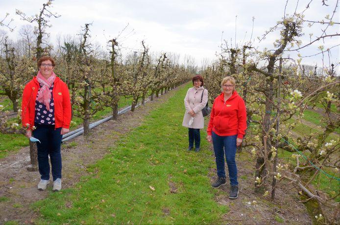 Bedrijfsleider An Verhofstede, schepen Marina Van Hoorick en gids Linda Schelfhout tussen de bloesems van het Eksaarde familiebedrijf.