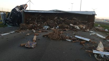 VIDEO. E19 in Loenhout urenlang volledig versperd door twee gekantelde vrachtwagens