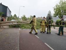 Harde wind zorgt voor omgewaaide bomen in Westerhaar en Holten