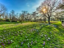 Na winters weer dit weekend recordwarmte verwacht, zondag 19 graden: 'Echt lenteweer'