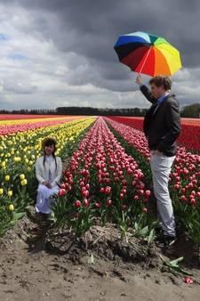 Flevoland in bloei