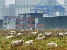 Nieuwe weg tussen N279 en bedrijventerreinen Veghel-West pilotproject voor duurzaamheid
