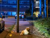 Hartverscheurend tafereel na schietpartij: hond laat zijn dodelijk gewonde baasje niet in de steek