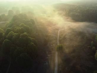 """Wat is het Nationaal Park Hoge Kempen eigenlijk? """"De enige plek in Vlaanderen waar je nog écht verloren kan lopen"""""""