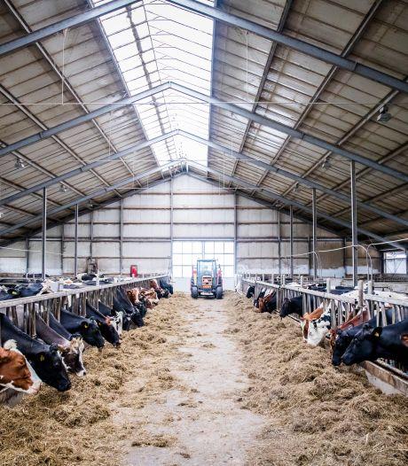Planbureau: Groot deel boeren moet weg om aan stikstofregels te voldoen