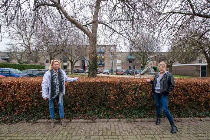 Ans Schutte en Loes Snijders bij het speelveldje aan de Nijverheidstraat. De kerstverlichting is uit de bomen verdwenen.