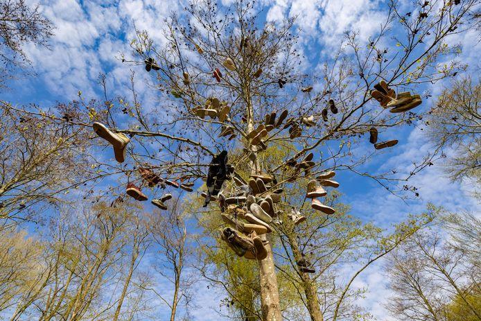 Na hun 'diensttijd' eindigen de schoenen van skaters in de boom.