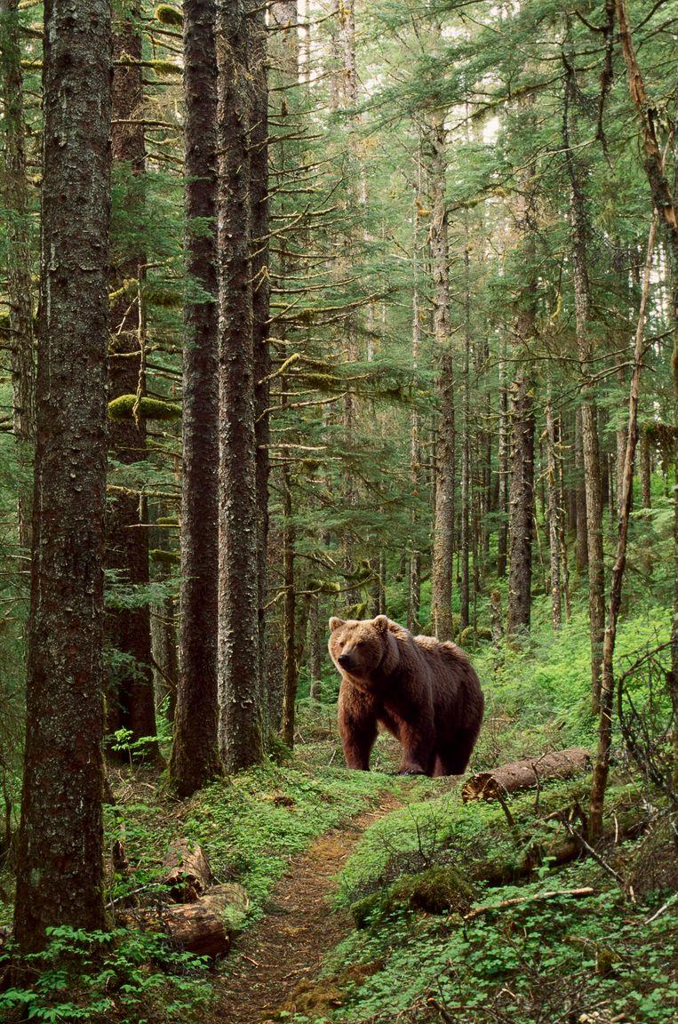 Marguerite de la Rocque werd in 1541 achtergelaten op een door beren bevolkt eiland in Newfoundland. Beeld Getty Images