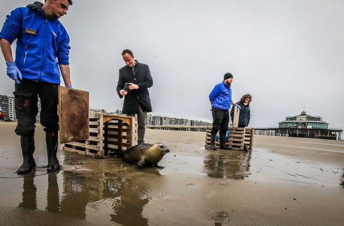 De zeehondjes worden hier vrijgelaten.
