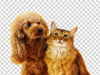 Baasjes van honden of katten: wie zijn het gelukkigste?