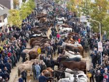 Frustraties uit het verleden van man (72) uit Hapert leiden tot bedreiging op Paardenmarkt