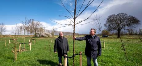 Klimaatbosje op Plaksche Veld in Bemmel is eerste stap op weg naar heel veel bosjes in Lingewaard