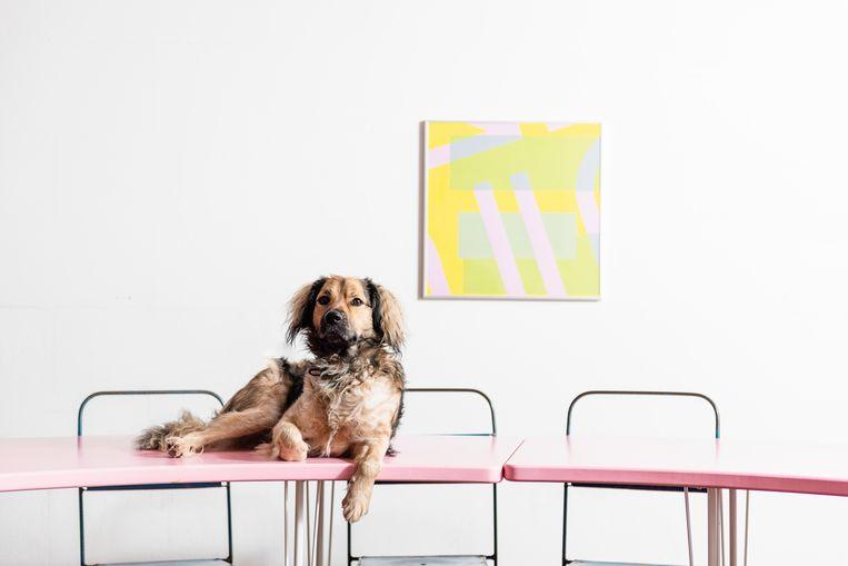 Kantoorhond Frits brengt zijn dagen door bij creatief agentschap DIFT. Beeld Sarah Van Looy