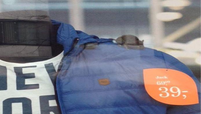 De muis wandelt rustig rond op de jas in de etalage van de V&D in Zeist.