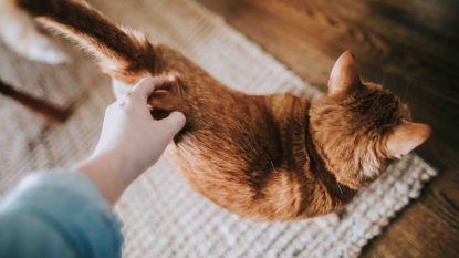 Miauw! Deze studie toont aan hoe geobsedeerd we écht zijn door onze kat