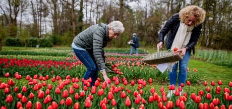 De pluktuin in Stokkum: 'Het is een feestje, al die mooie bloemen!'