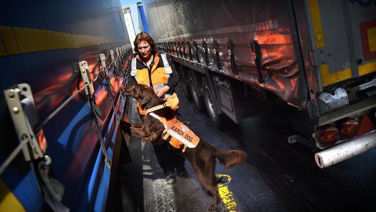 Met speurhonden wordt gezocht naar verstekelingen in Hoek van Holland Beeld Marcel van den Bergh