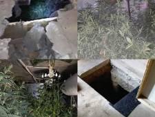 Was een 'Pool' verantwoordelijk voor de tunnel naar de ondergrondse wietplantage in Raalte?