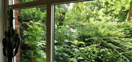 Brandnetels, struiken en boompjes benemen Wageningse ouderen het uitzicht uit hun huis