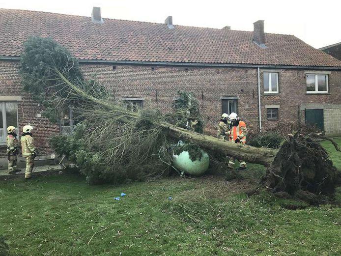 Een omgewaaide boom viel op een gastank in Oetingen.