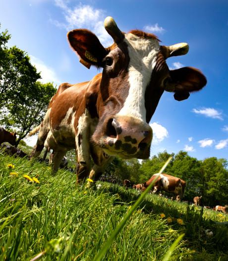 Brabants 'strenge' boerenbeleid landelijk uitgerold, maar stikstofregels leggen wel bommetjes onder het plan