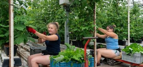 Oisterwijk zoekt nette huisvesting voor de eigen arbeidsmigrant: dat wordt een flinke klus