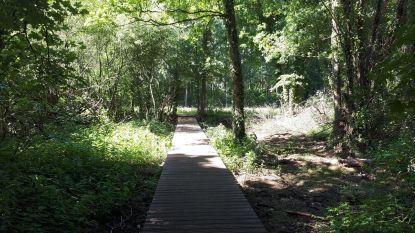 "Vlonderpad naar Hof ter Borght biedt veilig alternatief voor toegang via drukke gewestweg: ""Wandelaars kunnen rustig tot aan het kasteeldomein kuieren"""