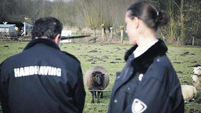 De gemeente Capelle aan den IJssel heeft al twee agenten die dierenleed opsporen. Foto:anp Beeld