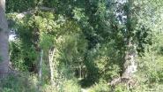 Natuurpunt wil een robuuste riviervallei in natuurgebied Grote Getevallei