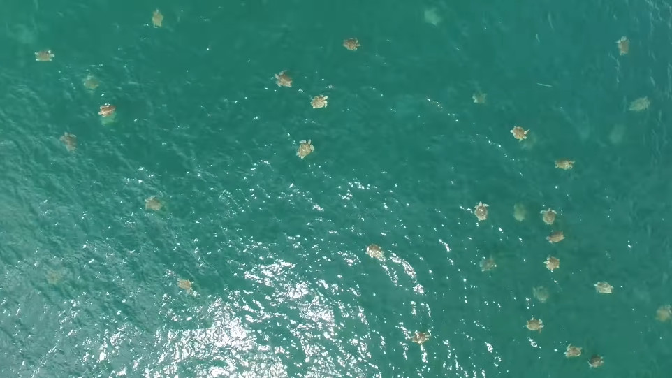 Er bovendien zich naar schatting meer dan 2000 zeeschildpadden per vierkante kilometer. Dat was tot dan ongezien.