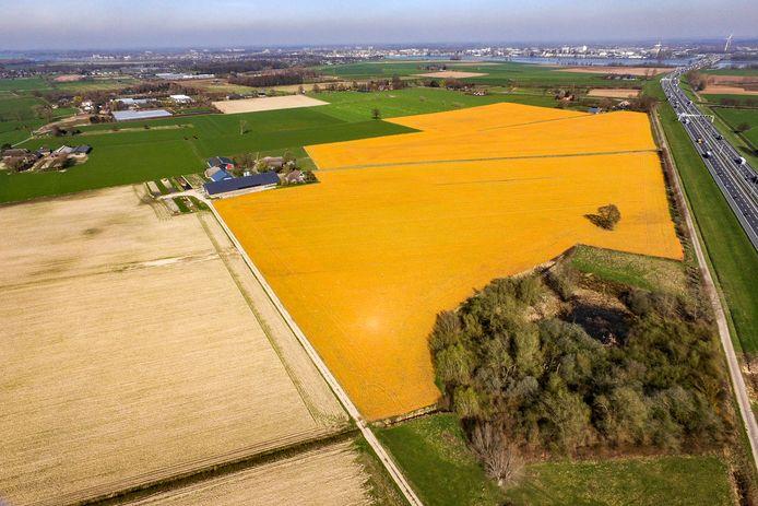 Gebruik van glyfosaat wordt vanaf 1 januari 2023 verboden. Door het bekende gewasbeschermingsmiddel slaan sommige landbouwpercelen geel uit.