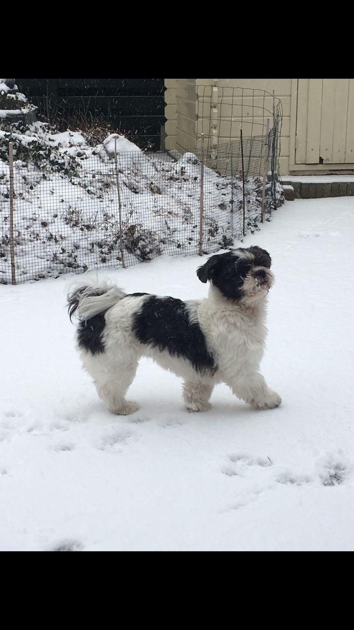 De hond van Monique van de Pol heeft plezier in de achtertuin in Bemmel.